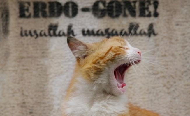 'Kedi' belgeseli Time'ın 'En iyi 10 film' listesinde