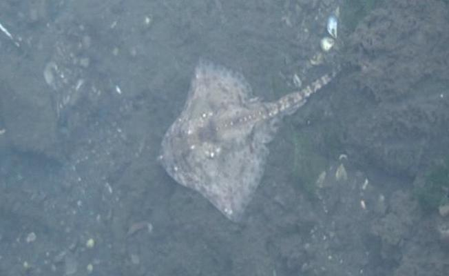 Maltepe'de deniz canlıları kıyıya vurdu