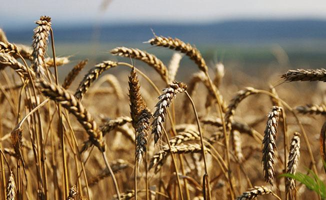 İnsanlar gıda olmadan soylarını ne kadar devam ettirebilir?