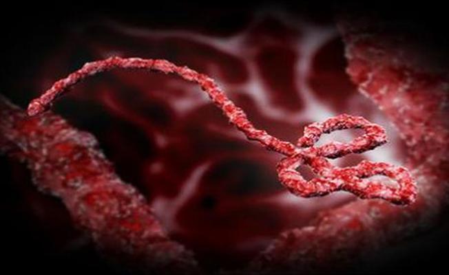 Tek bir enzim ile Ebola virüsü durduruldu