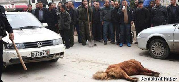 60 kişi bir köpeği katletti