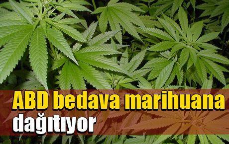 ABD bedava marihuana dağıtıyor