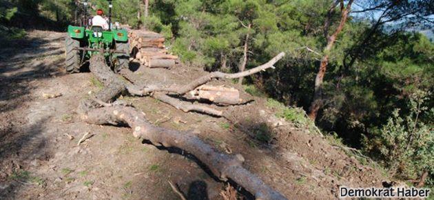 Ağaç kesimini durdurmaya hapis cezası istemi