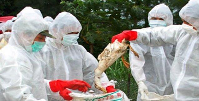 Artan kuş gribi vakaları Türkiye'nin tavuk ihracatını durdurdu
