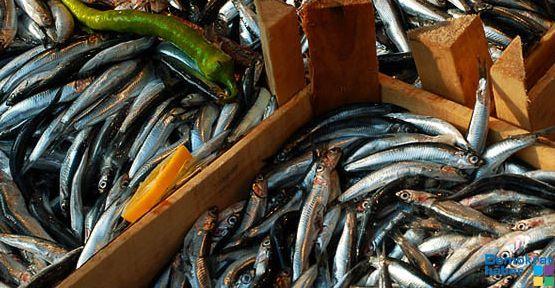 Balık avı yasağı başlıyor!