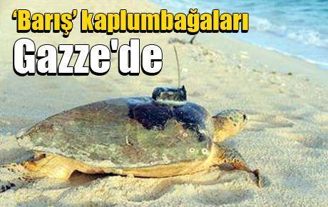 'Barış' kaplumbağaları Gazze'de