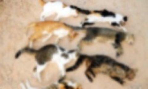 Bodrum'da kedi katliamı