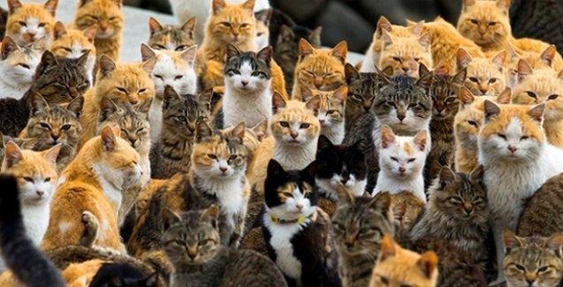Bu adada kedi sayısı insan sayısının 6 katı