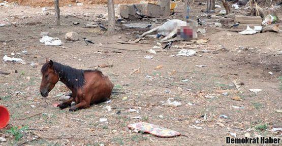 Büyükada'da atlar ölüme terk ediliyor