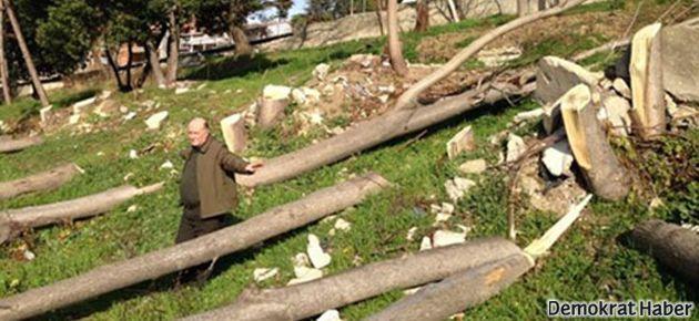 Büyükçekmece'de ağaç katliamı