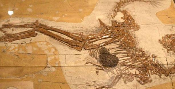 Çin'de yeni bir dinozor türü fosili keşfedildi