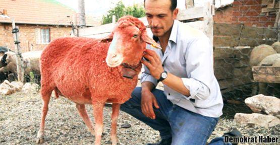 Derviş Zaim'in filminde başrol çobanların