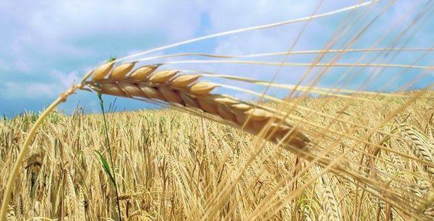 Don ve kuraklıktan etkilenen çiftçi borçlarına erteleme