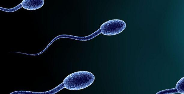 Fazla yağ ve spor sperm düşmanı!