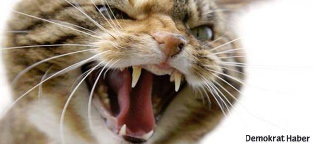 Fransa'da 'vahşi kediler çetesi' alarmı