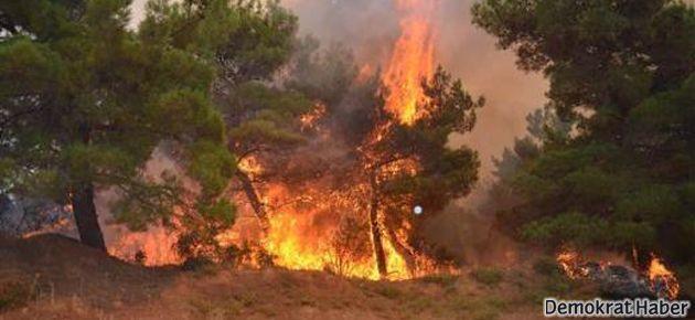 Gelibolu yarımadasında yangın!