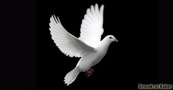 Gezi'den Lice'ye barış için mücadeleye
