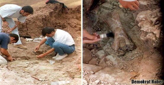 Gorillerin atası Anadolu'da yaşamış