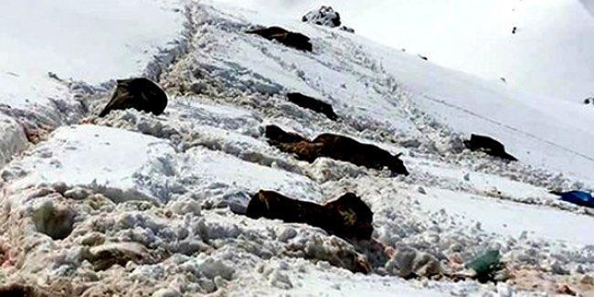 Hayvan hakları savunucuları: Roboski'de katırların katledilmesi barışın katledilmesidir