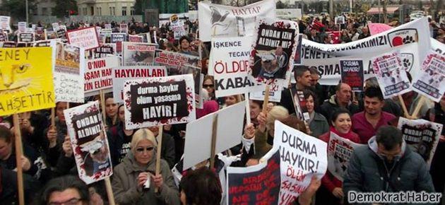 Hayvanseverler Kadıköy'de toplandı