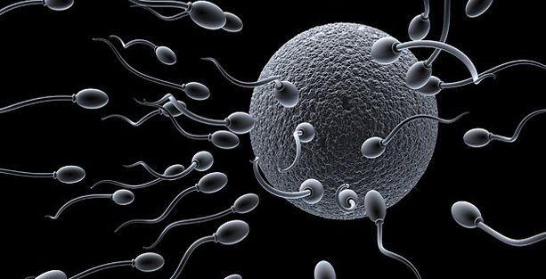 İngiltere'de sperm kıtlığı uyarısı