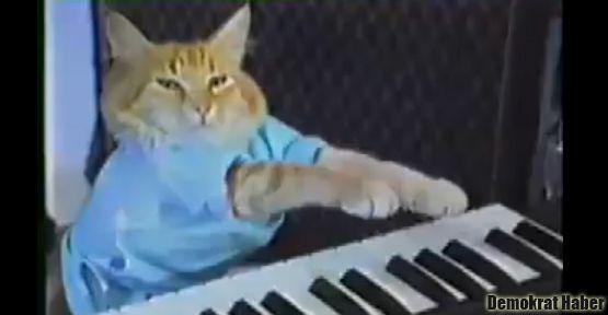 İnternet meşhuru kediler için festival