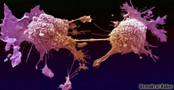 Kanser hücrelerini geri çevirmek için, göğüsleri sıkın