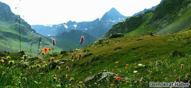 Kaz Dağları'nda termik santrala geçit yok