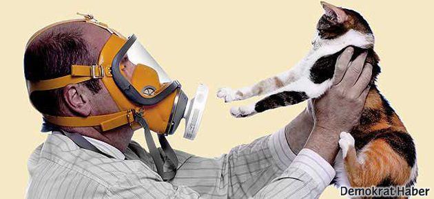 Kedi alerjisinin sebebi keşfedildi