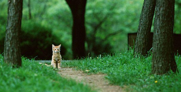 Kedi öldüren o üniversite öğrencisi: Zararı karşılamak isterim