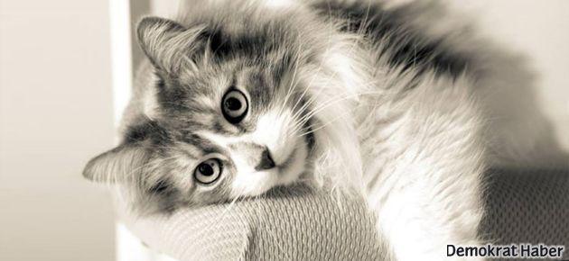 Kedi sevmek tansiyonu düşürüyor