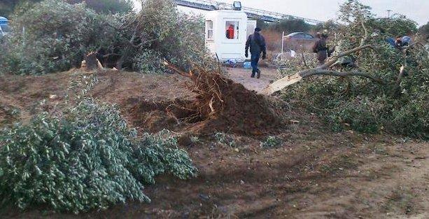 Yırca'da  'dalga geçer gibi' karar: Kesilen ağaçları koruma görevi köylüye!