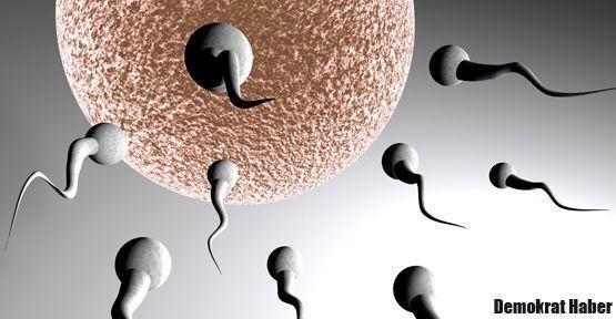 Kısırlığın giderilmesine yardımcı olacak gen bulundu
