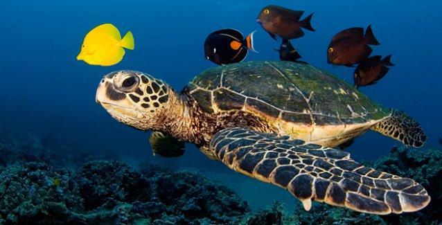 Küresel ısınma hayvan türlerini yok ediyor