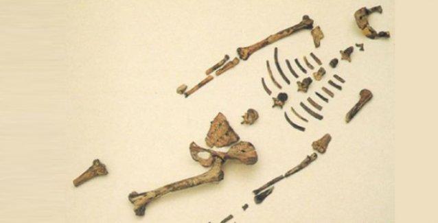 Lucy'nin fosiline ait kemikler arasında babun kemiği var iddiası