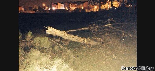 Macunköy'de yüzü aşkın ağaç kesildi!