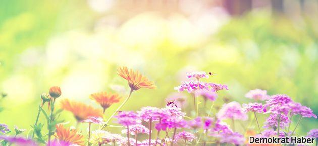 Mahpusların çiçekleri 'güvenlik' amaçlı toplatılıyor