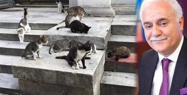 Nihat Hatipoğlu'nun ramazan programı için Sultanahmet'teki kedileri toplatmışlar