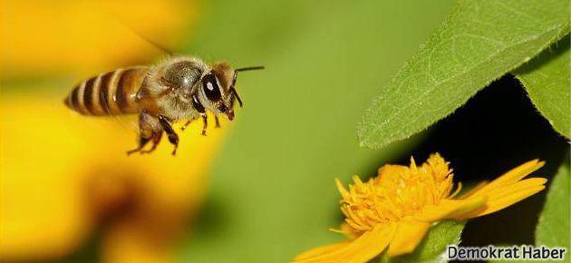 'O kadar örgütlüsünüz ki, arıları bile eğitmişsiniz!'