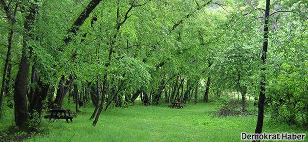 Ormanlık alanlar inşaata açılıyor