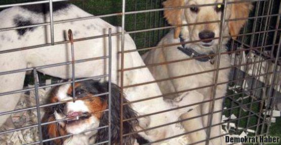 Pet shoplara kilit