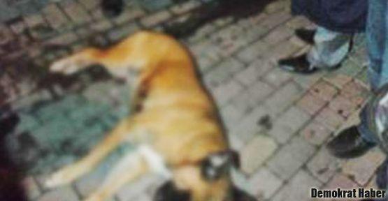 Polis, köpeğini 'korumak' için, sokak köpeğini silahıyla öldürdü