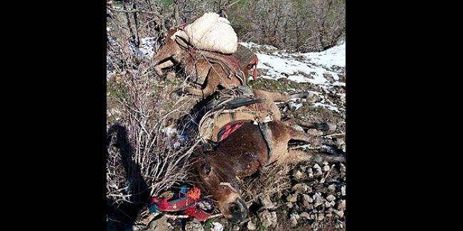 Roboski'de askerler katırları ateş açarak öldürdü