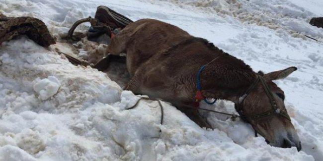 Roboski'de hayvan katliamı sürüyor: Asker bir katırı daha katletti