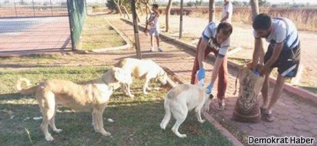 Sokak hayvanları için İMECE etkinliği