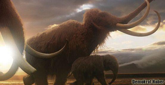 'Soyu tükenen mamutlar kopyalanabilecek'