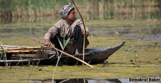 Su Bedevileri yaşam alanlarını kaybediyor