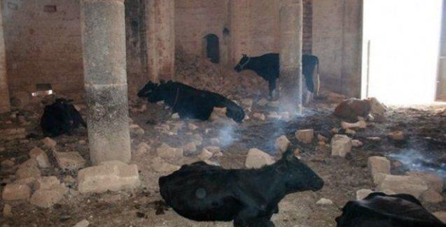 Tarihi Ermeni kilisesi ahır oldu