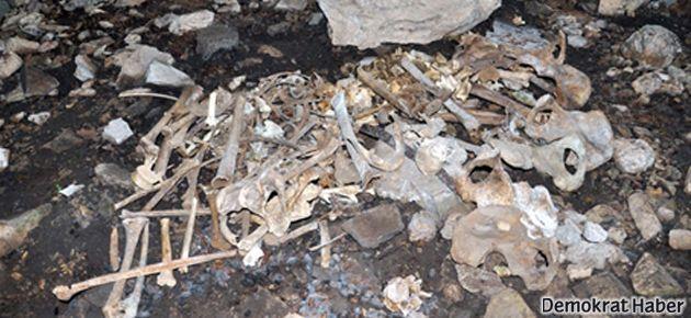 Tunceli'deki o kemikler hakkında karar