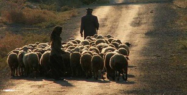 Turist rehberliğinden çobanlığa